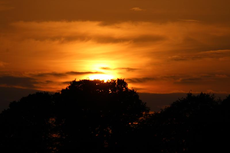 A beautiful golden summer sunset with orange and yellow fire in the sky, silhouetted by trees and shrubs