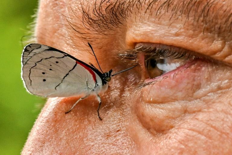 A butterfly settles on the side of Juan Guillermo Jaramillo's nose (AFP/JOAQUIN SARMIENTO)