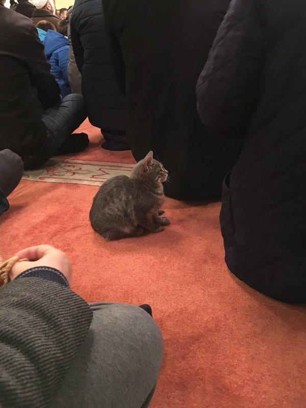 A cat sits among worshipers in the Aziz Mahmud Hüdayi Mosque in Istanbul, Turkey. [@ibrahimduzkalem/Twitter]