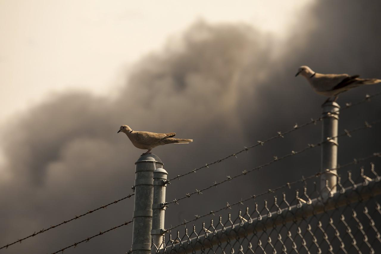 "Birds perch on a fence near smoke from the Sleepy Hollow fire in Wenatchee, Washington June 29, 2015. A wildfire racing through central Washington state ""blew up"" overnight, threatening homes and businesses as flames enveloped roughly 3,000 acres, nearly double the area burning only a day earlier, state officials said Monday.  REUTERS/David Ryder"