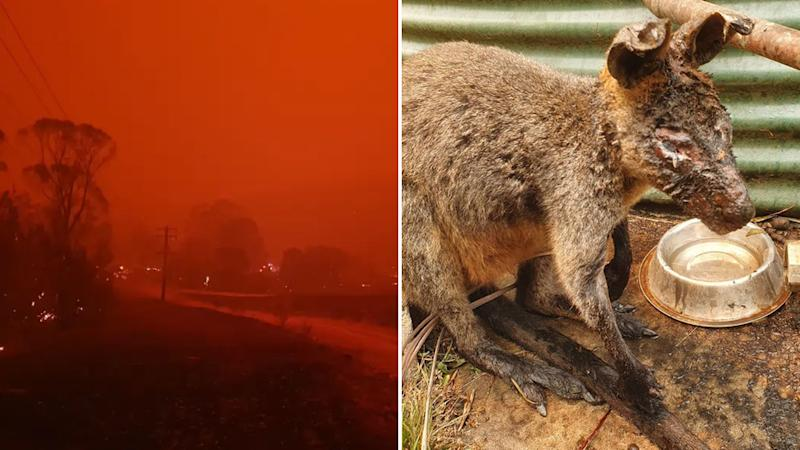 Nerrigundah on fire (left) and injured wildlife (right) after the devastating fires.
