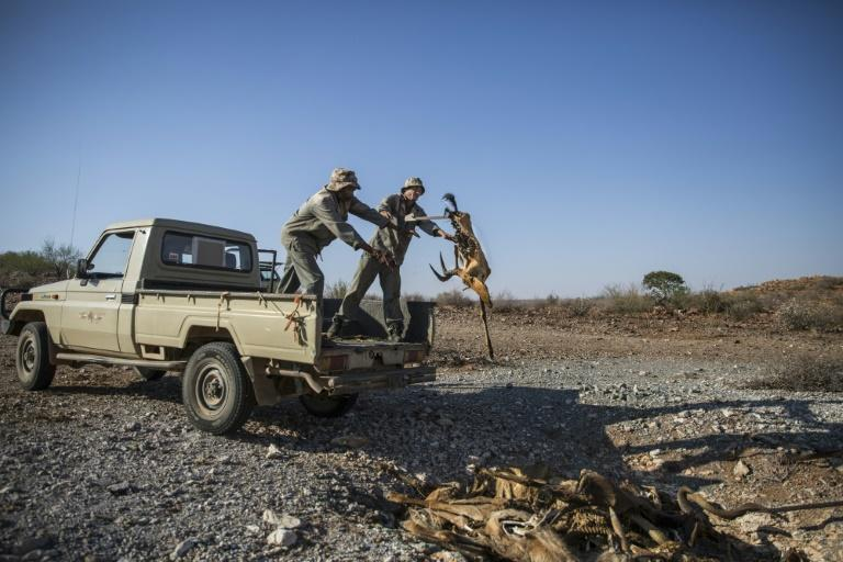 Workers at the game farm dispose of a carcass of a dead animal