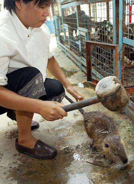 A 2002 image shows a kitchen worker using a wooden mallet to hit a water rat on the head to stun it before it is killed for a meal in a restaurant in the southern Chinese city of Guangzhou (AFP Photo/Peter PARKS)