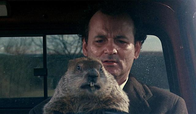 Bill Murray and his spirit animal in one of the best films of all time. (Photo: Columbia Pictures)