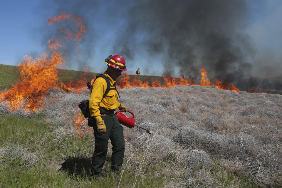 FILE - In this June 11, 2020 file photo Wynn Whitmeyer of the Idaho Falls Fire Department uses a drip can to ignite cheat grass and tumbleweeds during a controlled burn east of Idaho Falls, Idaho. Environmentalists have filed a notice of intent to sue the U.S government to block plans to build up to 11,000 miles (17,700 kilometers) of fuel breaks they claim would violate the Endangered Species Act in a misguided effort to slow the advance of wildfires in six Western states. (John Roark/The Idaho Post-Register via AP, file)
