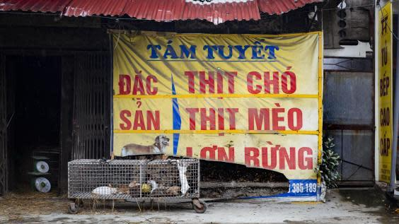 Street signs advertise dog and cat meat (Four Paws)