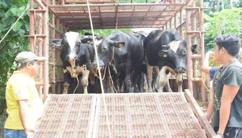 Vets to vaccinate livestock in preparation for dry spell