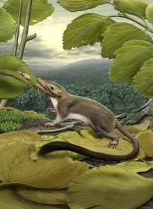 Meet the Last Common Ancestor of Bats, Whales, Sloths and Humans
