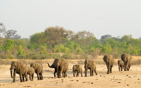 Hwange National Park, usually a haven for wildlife, has been badly hit by the drought - Credit: Christopher Scott/Getty Images