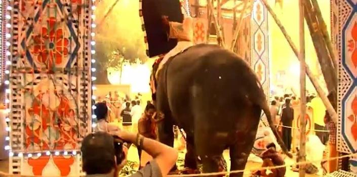 Elephants can get scared during firework displays and run amok