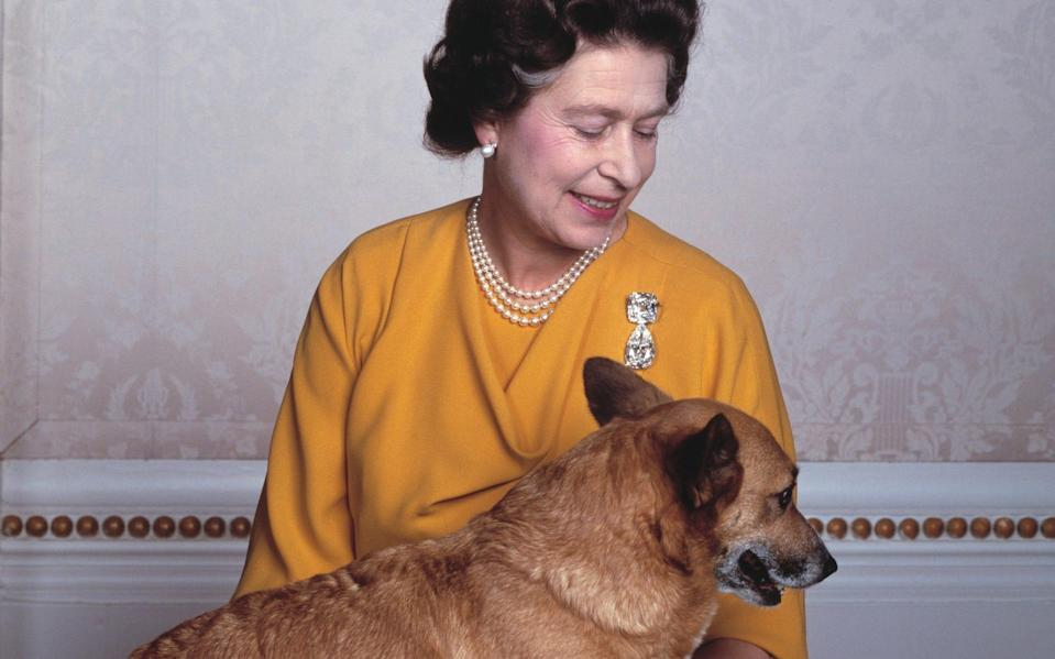 The Queen with one of her corgis in May 1985 - Yousuf Karsh