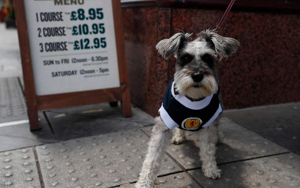 A dog in a Scotland shirt is seen in Glasgow ahead of the match - REUTERS