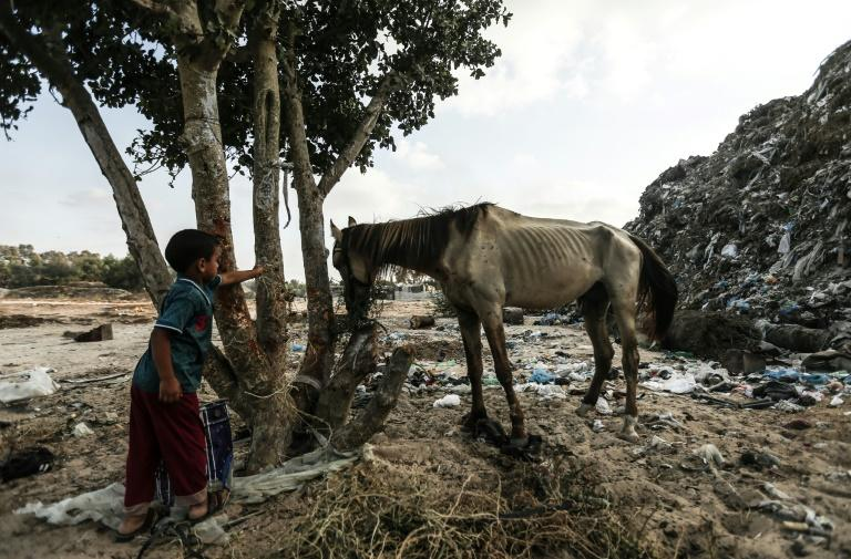 A Palestinian child looks at a horse in the Khan Yunis refugee camp in the Gaza Strip on August 25, 2018