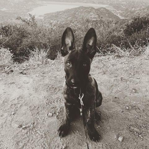 """<p>""""This is the newest member of the Tatum tribe,"""" Channing wrote in October 2020. """"Meet 'Rook' or 'Rooklin' 12 week old Dutch Shepard! He's gonna be a goon. After I lost my Lulu i didn't know when or if I'd be open to having another dog. But he sought me out and we met eyes and then some imprinting type shit happened. Haha I just hope i can handle the little hood rat. Haha that's also his nickname when he's being a little shit """"hoodie"""" cause boi is he little savage sometimes. @goldcoastk9 @dogthefilm he gonna be a hard hitter.""""</p><p><a href=""""https://www.instagram.com/p/CF8kV1JlvS3/"""" rel=""""nofollow noopener"""" target=""""_blank"""" data-ylk=""""slk:See the original post on Instagram"""" class=""""link rapid-noclick-resp"""">See the original post on Instagram</a></p>"""