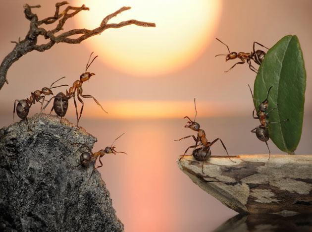 The fantasy world of ants: Photographs by Andrey Pavlov