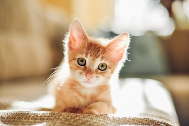 Stare at this cute kitten, save your relationship. It's a win-win. (Photo: Getty Images)