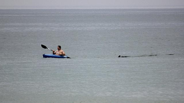 Great White Shark: Cape Cod Beach Reopens After Sighting