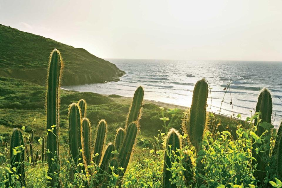 Cacti on Isaac Bay Beach on the island of St Croix