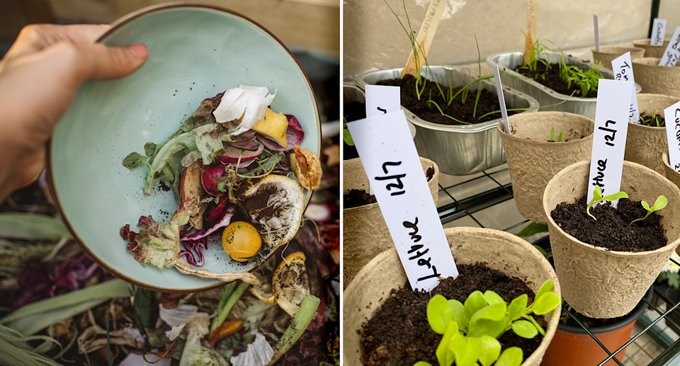 Left - scraps going into the compost. Right - plants growing at home in little pots.
