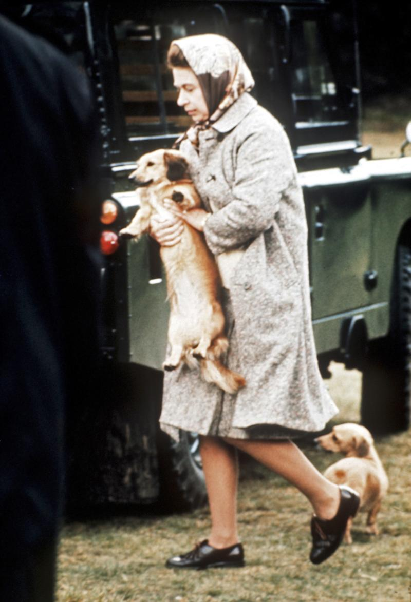 Queen Elizabeth II carrying one of her dogs at Windsor Great Park, England, 1990.