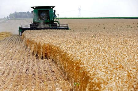 FILE PHOTO: A combine drives over stalks of soft red winter wheat during the harvest on a farm in Dixon, Illinois