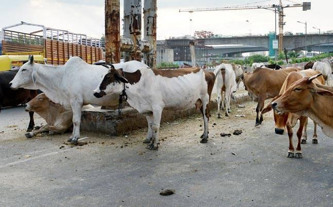 Jammu and Kashmir: Gau rakshaks attack nomad family, including 9-year-old girl, in Reasi, say reports