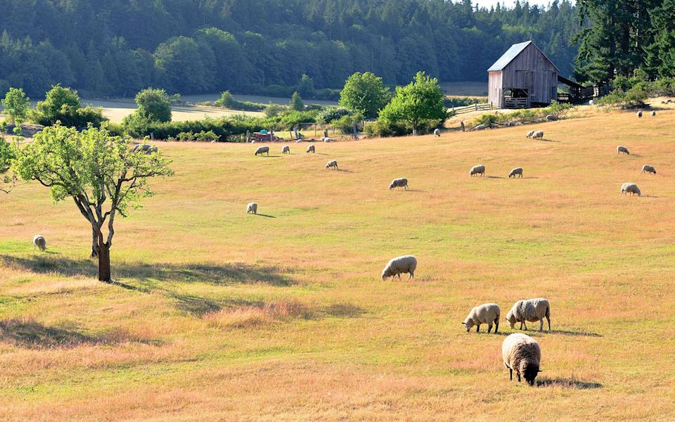 """<p>Vancouver Island may have the spotlight, but neighboring Salt Spring is impossibly picturesque (imagine rocky shores, rolling pastures, and sky-high oak trees). Cheese makers, vintners, and an eclectic group of artists and craftspeople live here year-round. It's precisely that eco-artist vibe that lured Michael Abelman and Jeanne-Marie Herman here to open the sustainable <strong>Foxglove Farm</strong> <em>(1200 Mount Maxwell Rd.; 250/931-5336; <a href=""""http://www.foxglovefarmbc.ca"""" rel=""""nofollow noopener"""" target=""""_blank"""" data-ylk=""""slk:foxglovefarmbc.ca"""" class=""""link rapid-noclick-resp"""">foxglovefarmbc.ca</a>; doubles from $175).</em> The wooden cottages have views of Lake Maxwell (book the Log House, with its stone fireplace).</p><p><strong>T+L Tip:</strong> The Saturday farmers' market at nearby Centennial Park showcases works by native potters and jewelers. -<em>Nicole Alper</em></p>"""