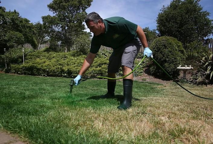 NOVATO, CA - MAY 29: Brown Lawns Green owner Bill Schaffer applys green paint to a brown lawn on May 29, 2015 in Novato, California. As the severe California drought continues to worsen, homeowners and businesses looking to conserve water are letting lawns go dormant and are having them painted to look green. The paint lasts eigh weeks on dormant lawns and will not wash off. (Photo by Justin Sullivan/Getty Images) ORG XMIT: 555206203
