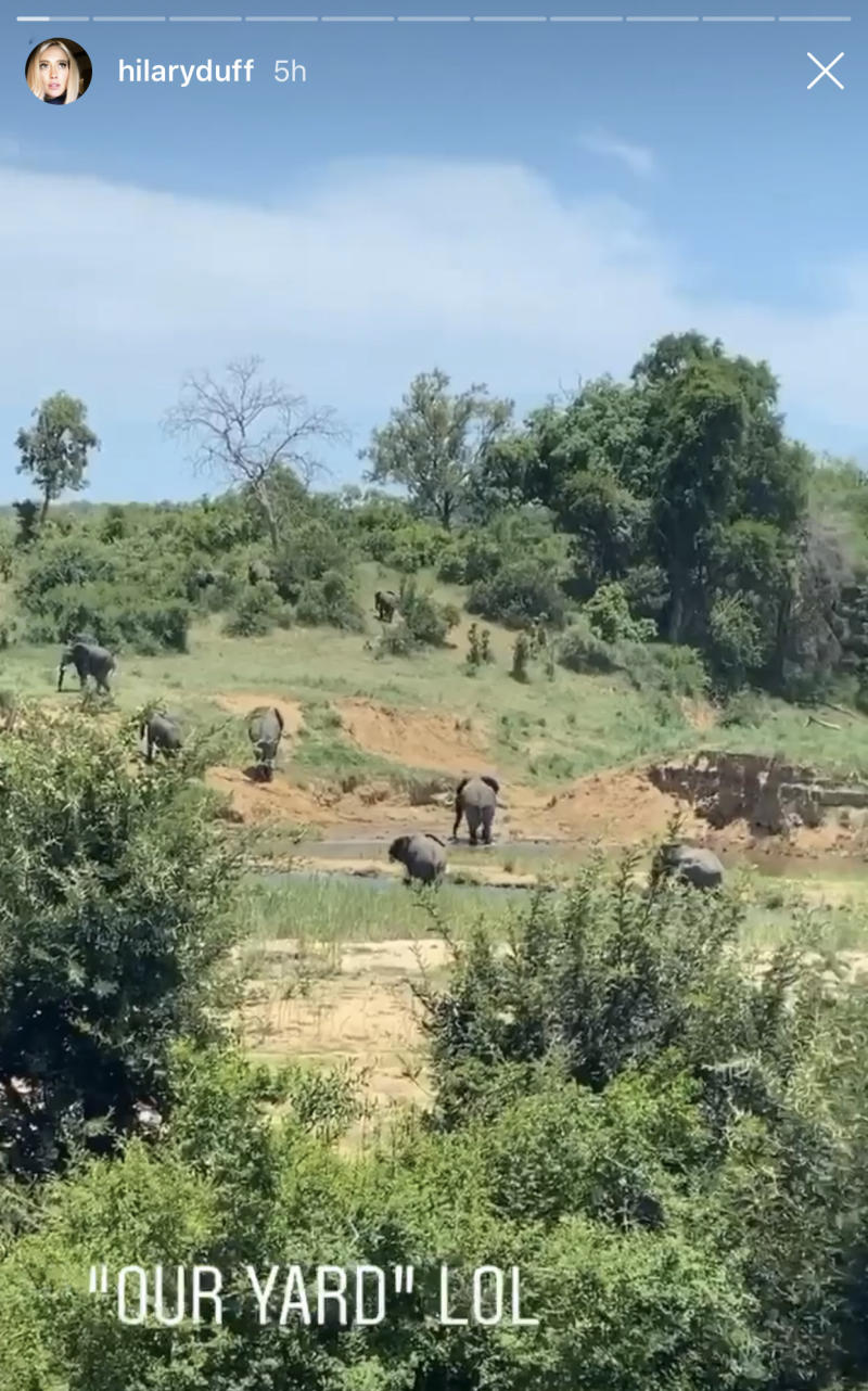 Hilary Duff posted an Instagram story from her South African safari honeymoon, where she spotted a herd of elephants. (Hilary Duff/Instagram)