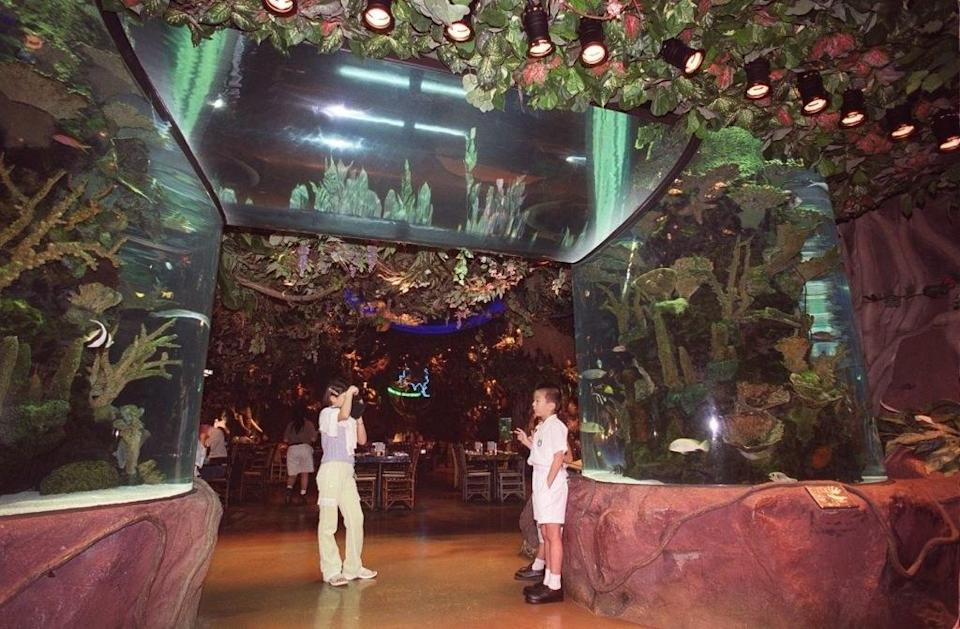 people inside of a Rainforest Cafe
