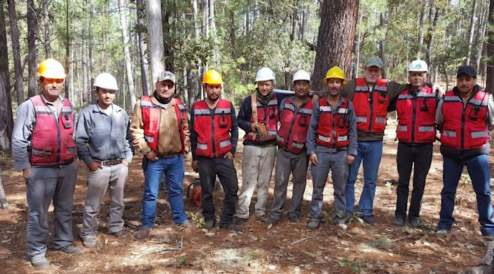 Foresters outdoors in hard hats and safety vests.