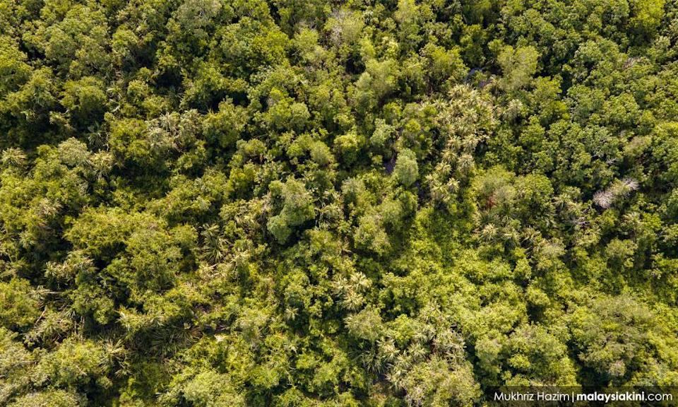 Kuala Langat forest development an affront to existing policies, says NGO