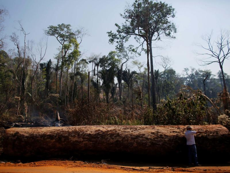 Since Brazil's Jair Bolsonaro took office, illegal logging and mining have led to hugely increased deforestation: Reuters/Nacho Doce