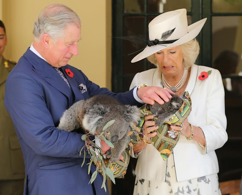 Camilla Parker Bowles holding a koala named Matilda with Prince Charles during their Diamond Jubilee Tour of Papua New Guinea, Australia, and New Zealand, in Adelaide, November 2012.