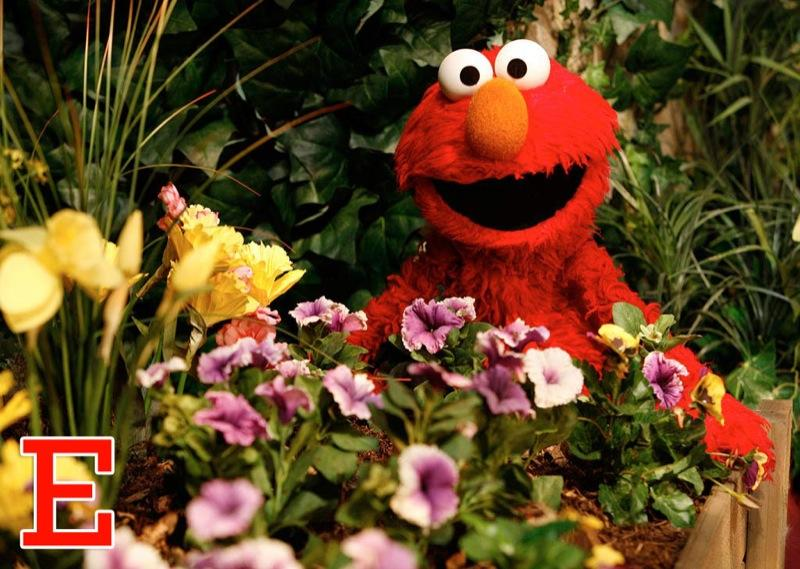 """E is for Elmo: The furry red monster famous for referring to himself in third person (""""Elmo wants to dance!"""") moved into the neighborhood in 1984 and has risen in popularity ever since. He's appeared on talk shows such as <a href=""""/martha-stewart-living/show/32009"""">""""Martha Stewart Living,""""</a> <a href=""""/the-view/show/253"""">""""The View,""""</a> and """"The Rosie O'Donnell Show."""" In 1996, Tyco introduced a """"Tickle Me Elmo"""" plush toy that when squeezed, shook and laughed hysterically, making it the """"it"""" toy of the holiday season. <a href=""""http://www.zap2it.com/"""" rel=""""nofollow"""">Source: Zap2it</a>"""