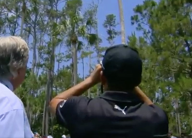 Fowler falls foul of palm tree to make early exit from Players