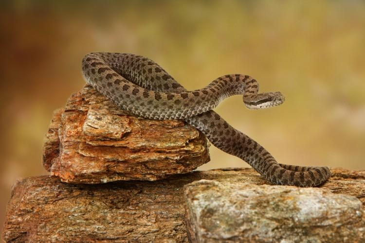 Top 20 Most Deadliest and Dangerous Snakes In the World