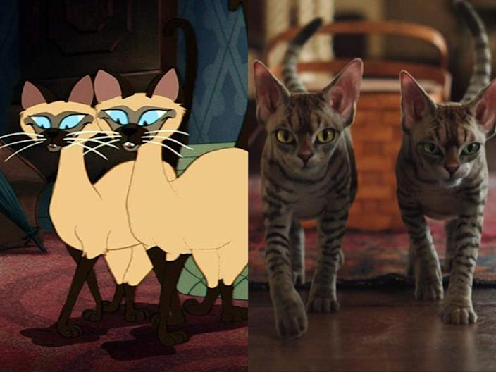 cats animated live action