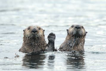 """""""Come on in, won't ya? The water's mighty cool."""""""