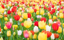 """<p>Whether you need some new ideas for your <a href=""""https://www.housebeautiful.com/lifestyle/gardening/g30614606/early-spring-flowers/"""" rel=""""nofollow noopener"""" target=""""_blank"""" data-ylk=""""slk:garden"""" class=""""link rapid-noclick-resp"""">garden</a>, want to change your wallpaper to an image of <a href=""""https://www.housebeautiful.com/about/a31209101/ranunculus-farm-california/"""" rel=""""nofollow noopener"""" target=""""_blank"""" data-ylk=""""slk:flowers"""" class=""""link rapid-noclick-resp"""">flowers</a>, or you just want to look at pictures of pretty <a href=""""https://www.housebeautiful.com/about/a31209101/ranunculus-farm-california/"""" rel=""""nofollow noopener"""" target=""""_blank"""" data-ylk=""""slk:blooms"""" class=""""link rapid-noclick-resp"""">blooms</a>, we've rounded up tons of images of stunning flowers that brighten any <a href=""""https://www.housebeautiful.com/lifestyle/gardening/g2456/landscaping-ideas/"""" rel=""""nofollow noopener"""" target=""""_blank"""" data-ylk=""""slk:landscape"""" class=""""link rapid-noclick-resp"""">landscape</a>. These pictures of flowers are so pretty that you might even be inspired to draw your own. And if you're looking to refresh your <a href=""""https://www.housebeautiful.com/lifestyle/gardening/g28467916/how-to-attract-birds-birdscaping-garden/"""" rel=""""nofollow noopener"""" target=""""_blank"""" data-ylk=""""slk:yard"""" class=""""link rapid-noclick-resp"""">yard</a>, consider planting these colorful species of flowers. We've also included when each flower typically blooms, so once you've figured out which types of flowers would look best in your garden, you'll know when the plants will thrive.If you want to learn more about different types of flowers, we've got you covered. </p><p>We've included a wide variety of various blooms—common types of flowers and maybe some species of flowers you've never heard of. Along with the names and pictures of the flowers, you'll find interesting details about the beautiful blooms (Did you know adding myrtle in a bridal <a href=""""https://www.housebeautiful.com/entertaining/flower-arrangements/"""