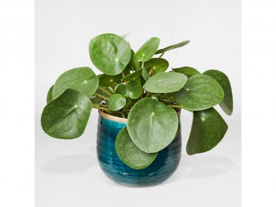 Indoor plants have proven psychological benefits and this budget-friendly style is low-maintenance too (Patch Plants)