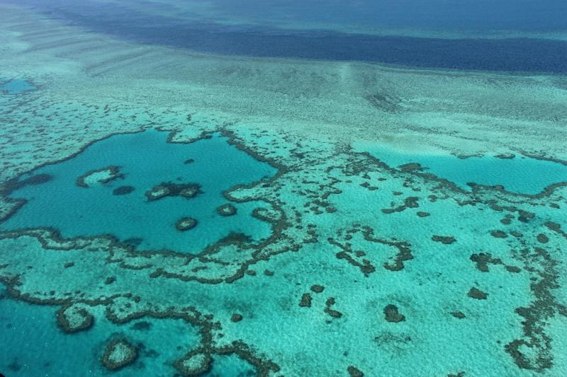 The World Heritage-listed reef is the largest living structure on Earth and its economic and social value was calculated for the first time in the Deloitte Access Economics report commissioned by the Great Barrier Reef Foundation (AFP Photo/Sarah LAI)