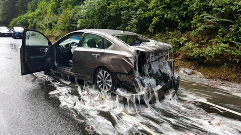 This photo provided by the Oregon State Police shows a vehicle after a truck overturned and its container with eels hit the vehicle on Highway 101 in Depoe Bay, Ore., Thursday, July 13, 2017. Police said Salvatore Tragale was driving north with 13 containers holding 7,500 pounds (3,402 kilograms) of hagfish, which are commonly known as slime eels. When hagfish become stressed, they secrete a slime, which can be seen in the photos on the vehicles and on the highway, police said. (Oregon State Police via AP)