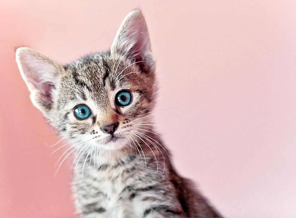 Your cat will thank you for these treats. (Photo: Getty)
