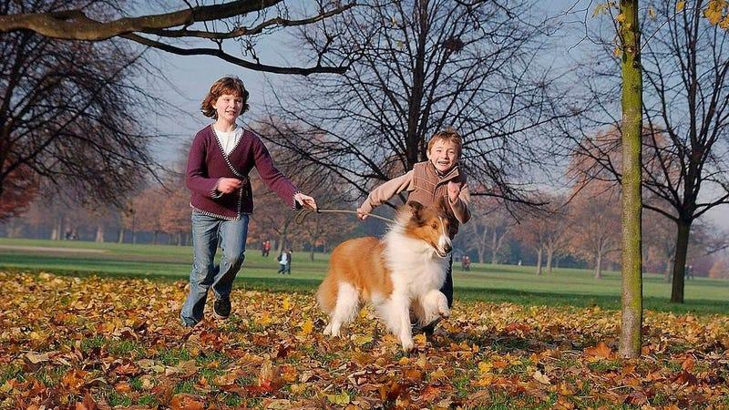 a promo shot from the 2005 version of Lassie