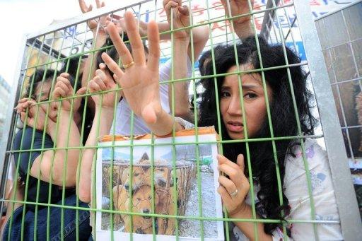 South Korean animal rights activists lie in cages as part of a demonstration against the local custom of eating dog meat