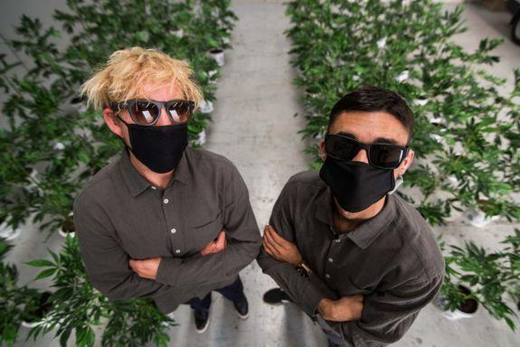 """<img alt=""""""""/><p>Look, there's been a lot of 4/20 stunts popping up around the joint. A <em>lot</em>.</p> <p>Not all of them are great, but a bunch of marijuana plants hidden in plain sight, not hurting anyone? We're in.</p> <div><p>SEE ALSO: <a rel=""""nofollow"""" href=""""https://mashable.com/2018/02/25/marijuana-gadgets-tech/?utm_campaign=Mash-BD-Synd-Yahoo-Watercooler-Full&utm_cid=Mash-BD-Synd-Yahoo-Watercooler-Full"""">From smart bongs to home growing kits, the best marijuana tech gadgets</a></p></div> <p>Australian artists installed """"cannabis"""" plants all over Sydney's central business district on April 20 (also known as 4/20, international marijuana day), in an effort to draw attention to the country's debate around cannabis legalisation.</p> <p>If you're thinking of stealing some free pot, we've got some bad news for you. The plants aren't real. They're movie props, as the act of owning cannabis plants without a medicinal manufacturing license, or giving away free cannabis is, you guessed it, <a rel=""""nofollow"""" href=""""https://www.tga.gov.au/access-medicinal-cannabis-products-1"""">illegal</a>. But it's the thought that counts, right?</p> <p>It's a promotional stunt by Sydney artists Craze Co and Ballin' On A Budget in conjunction with Australia's largest cannabis and hemp event, the <a rel=""""nofollow"""" href=""""http://www.hhiexpo.com.au/"""">Hemp Health and Innovation Expo</a>, which is happening on May 12 and 13. The promo campaign has been dubbed """"Who Are We Hurting?""""</p> <p><img title=""""Craze Co. had a big night."""" alt=""""Craze Co. had a big night.""""></p> <p>Craze Co. had a big night.</p><div><p>Image:  HHI</p></div><p>""""The sad fact is everybody knows that cannabis isn't nearly as bad for people as, say, alcohol or cigarettes,"""" said Craze in a statement. """"But no-one wants to talk about it because it has such a stigma. We're just hoping to get people talking""""</p> <p>The plants have been installed in Darling Harbour, Foundation Park, McMahon's Point Wharf and Martin Place, with a full li"""