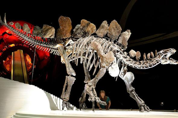 World's most complete stegosaurus skeleton finds new home at Natural History Museum