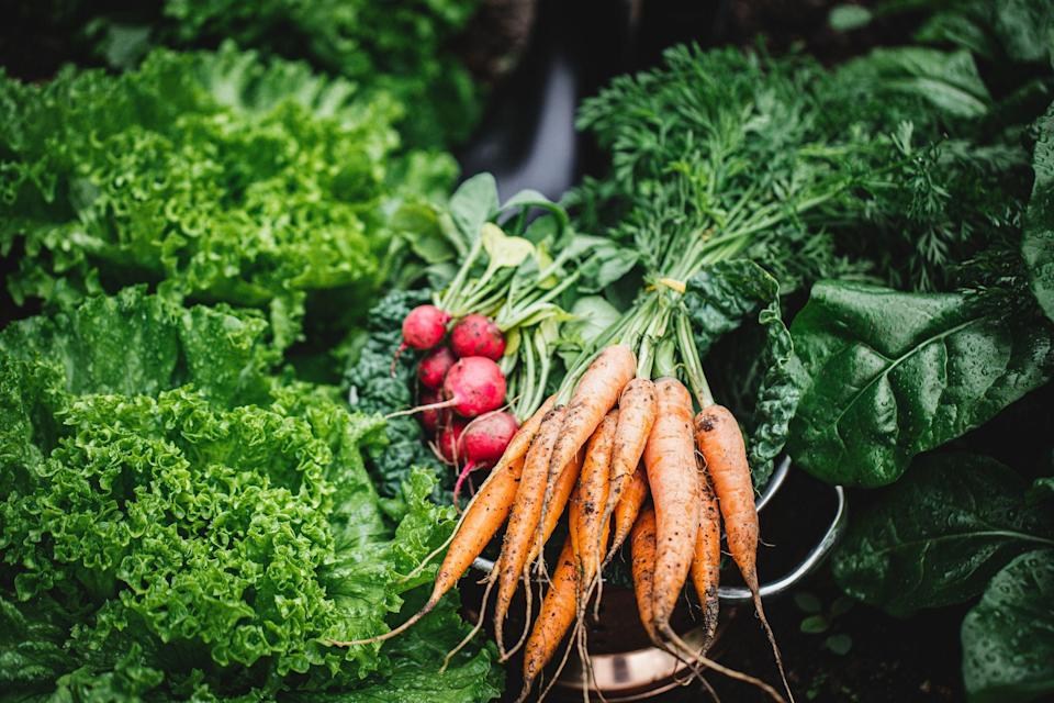 """<p>Looking for easy vegetables to <a href=""""https://www.prima.co.uk/home-ideas/gardening/a31953725/herb-garden/"""" rel=""""nofollow noopener"""" target=""""_blank"""" data-ylk=""""slk:grow"""" class=""""link rapid-noclick-resp"""">grow</a>? If you're dreaming of harvesting your own homegrown produce but want super-quick results, we've rounded up seven fast-growing vegetables which produce impressive results in no time. </p><p>For example, cress can take as little as five days from sowing, and radishes in as little as three weeks. Best of all, these vegetables don't require much ongoing maintenance, so they're perfect for the impatient gardener, and for beginners who are starting a vegetable garden.</p><p>The best thing about growing your own veg is that it will save you lots of money in the long run, and you get a great sense of joy and self-satisfaction at eating your own homegrown produce. </p><p>Here's our pick of seven fast-growing vegetables for your garden...</p>"""