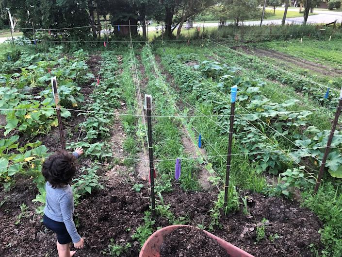 The Community Ecology Institute's climate victory garden in Columbia, Maryland. (Photo: HuffPost)